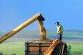 A soja ocupou 36,949 milhões de hectares, 3% mais que em 2018/19 (Foto: Jonas Oliveira/ANPr)
