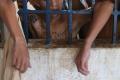 FORTALEZA, CE, BRASIL, 05-05-2016 :Menores infratores nos Centros educacionais São Francisco e São Miguel.     (Foto: Fabio Lima/O POVO)