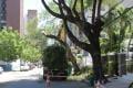 Poda de árvores segue em Fortaleza. (Foto: Evilázio Bezerra, em 12/11/2016) (Foto: EVILÁZIO BEZERRA, em 12/11/2016)