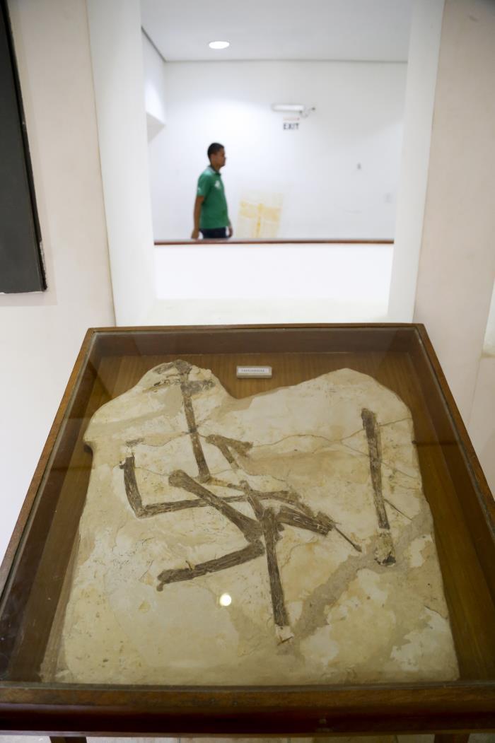 Fósseis incríveis do Cariri