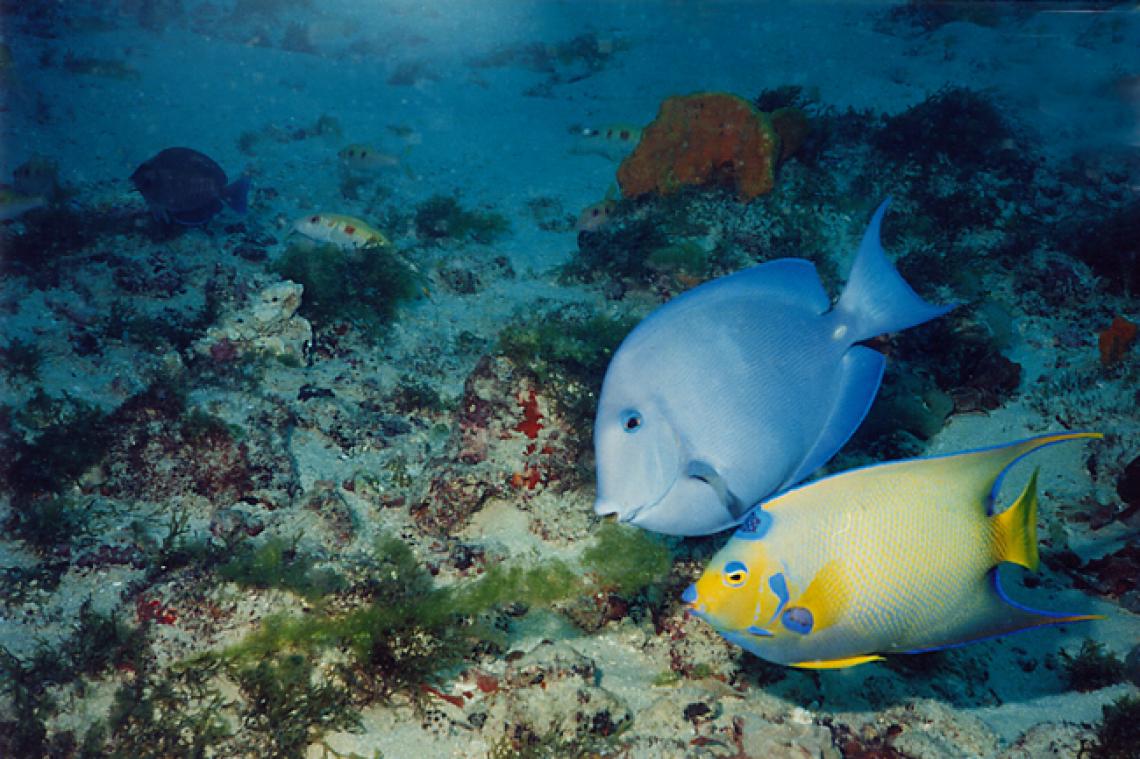 Pesquisa identificou 131 espécies de peixes em parque de conservação de Fortaleza (Foto: divulgação/Eduardo Freitas)