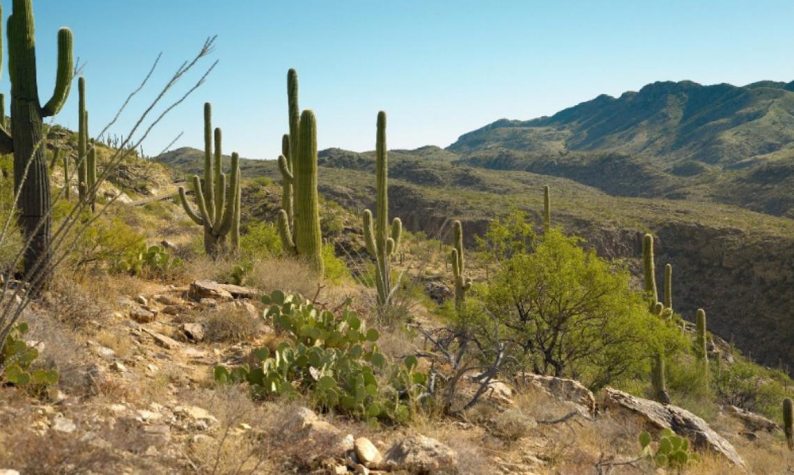 Canyon Ranch, no Arizona, Estado Unidos. (Foto: Divulgação/Trip Advisor)