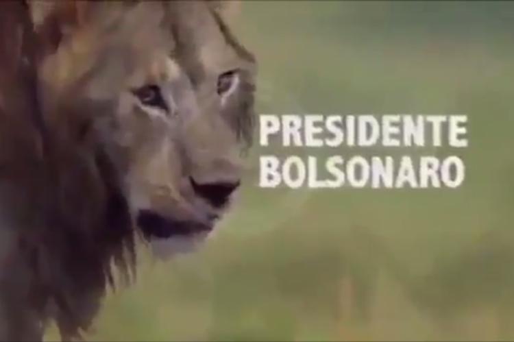 OSupremo Tribunal Federal (STF), a Organização das Nações Unidas (ONU), o seu partido PSL, siglas de oposição como o PT e o PCdoB e veículos de imprensa são algumas das hienas que atacam o leão Bolsonaro