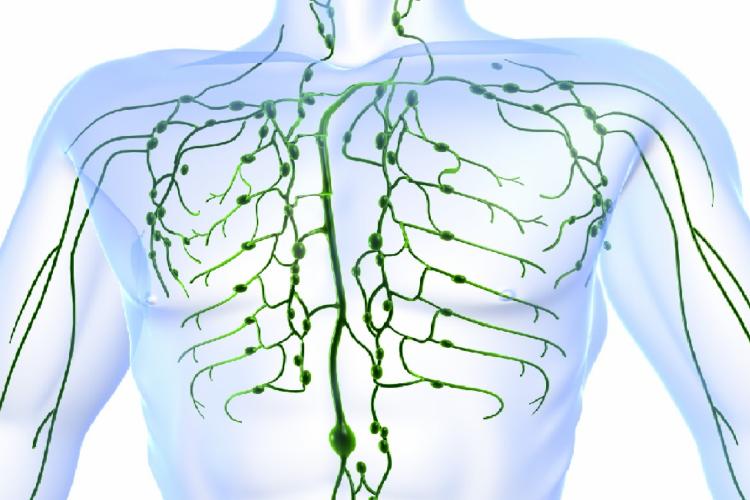 Sistema linfático está presente em todo o organismo humano; doença surge por alteração no sistema (Foto: Reprodução/Observatório de Oncologia)