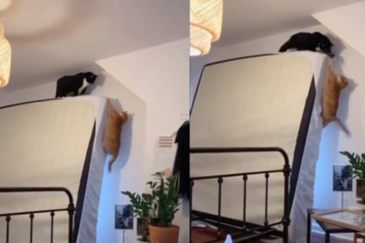 """Os gatos, especialmente o que foi expulso do colchão, não sofreram nenhum tipo de ferimentos na """"encenação"""" de """"O Rei Leão""""  (Foto: Reprodução / TikTok)"""