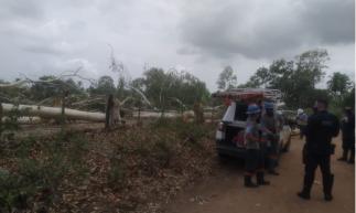 Fiscais da Prefeitura e guardas municipais acompanharam a ocorrência. Situação aconteceu em zona rural do município de Paracuru.