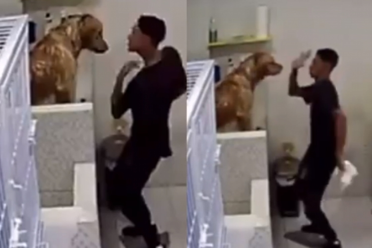 Yan Kardec dança e brinca com cachorro em pet shop (Foto: REPRODUÇÃO/INSTAGRAM)