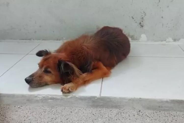 A lealdade do cachorro comoveu funcionários do hospital, que forneceram água e ração (Foto: Divulgação/Hospital do Coração)