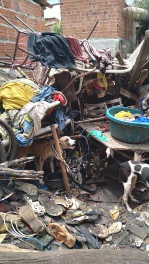Todos foram resgatados, examinados, medicados e alimentados pelo Centro de Zoonoses de Juazeiro do Norte (Foto: Divulgação/SSPDS)