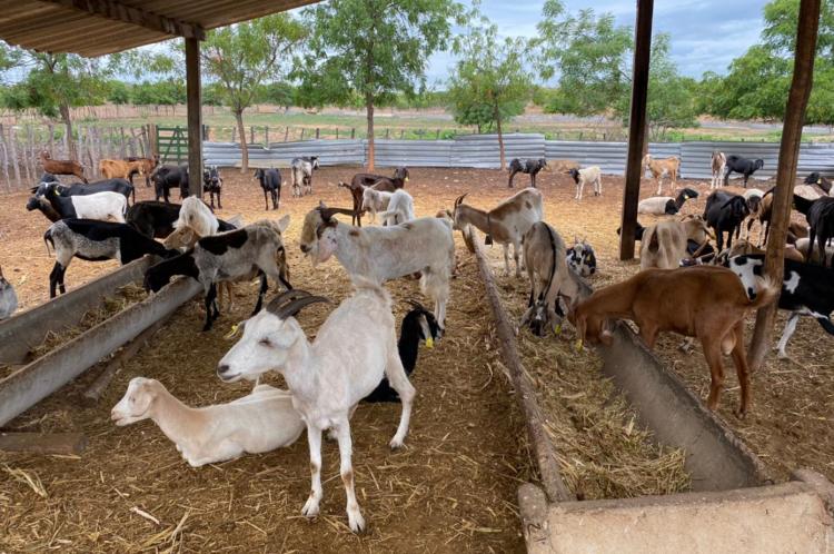 Após os sete dias, os animais que não foram retirados por tutores são encaminhados à fazenda do órgão