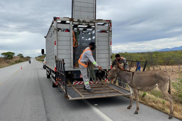As equipes da autarquia operam com 14 caminhões apropriados para transporte e captura (Foto: Reprodução/Detran)