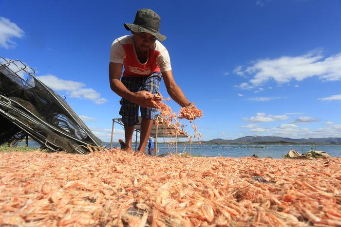 A Seca que Matou os Peixes