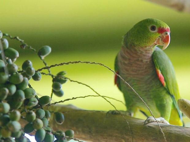Foto de um papagaio