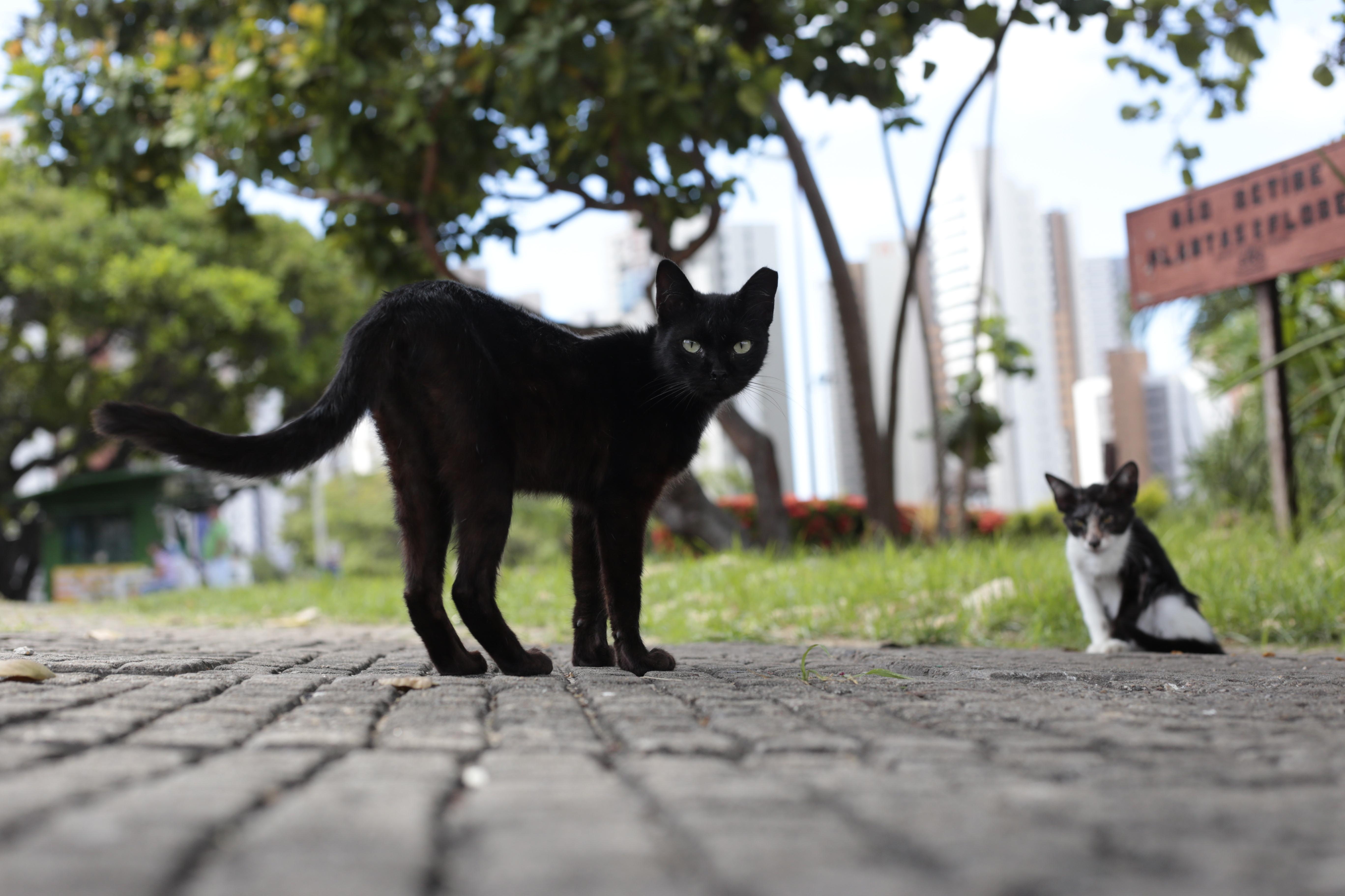 Na foto, gatos no Parque do Cocó