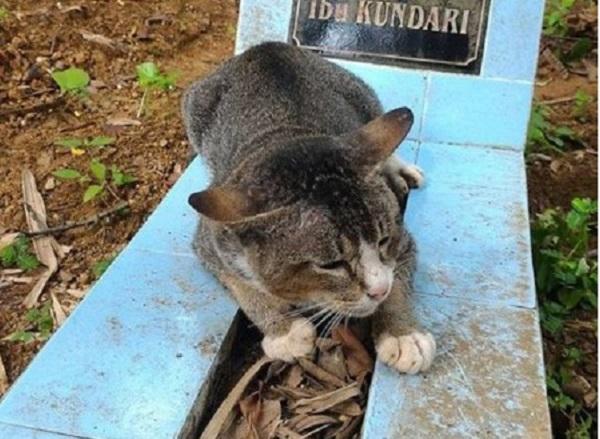 Foto de gato deitado em um túmulo