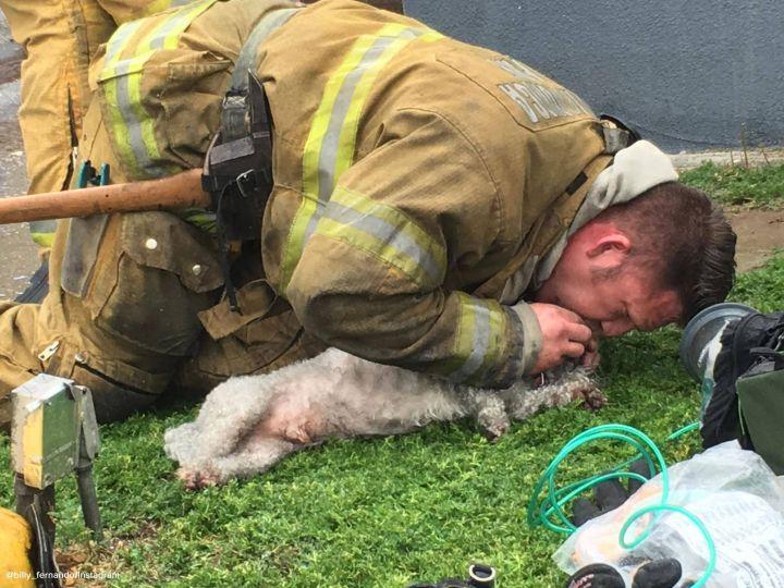 Bombeiro deitado no chão, fazendo respiração boca-a-boca no cachorro