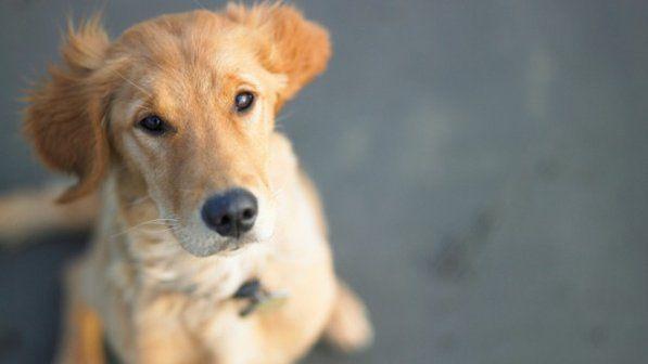 Um cachorro olhando para cima.