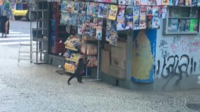 um macaco pegando biscoito numa banca de revista