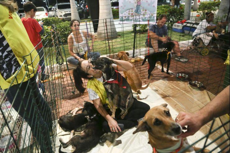 Voluntária e cachorros para adoção
