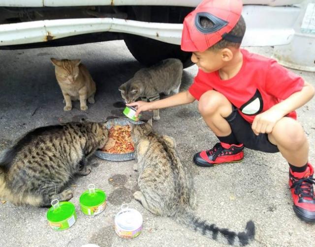 criança fantasiada alimentando gatos