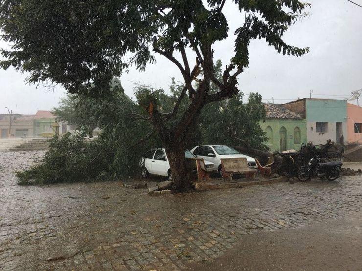 Árvore é derrubada por forte chuva