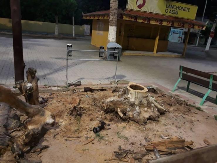 restos da árvore cortada