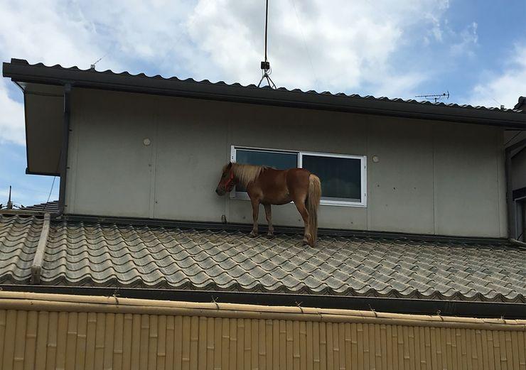Égua sobre o telhado