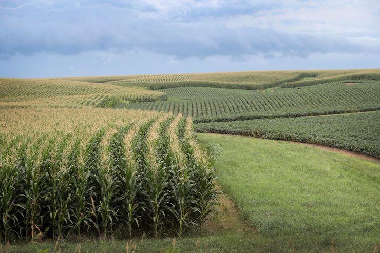 Imagem de plantação