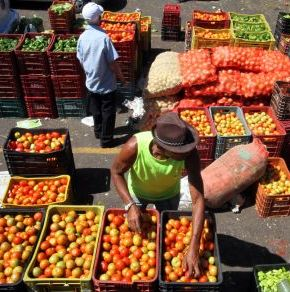 Legumes e verduras podem ter variação dependendo da quantidade de chuva
