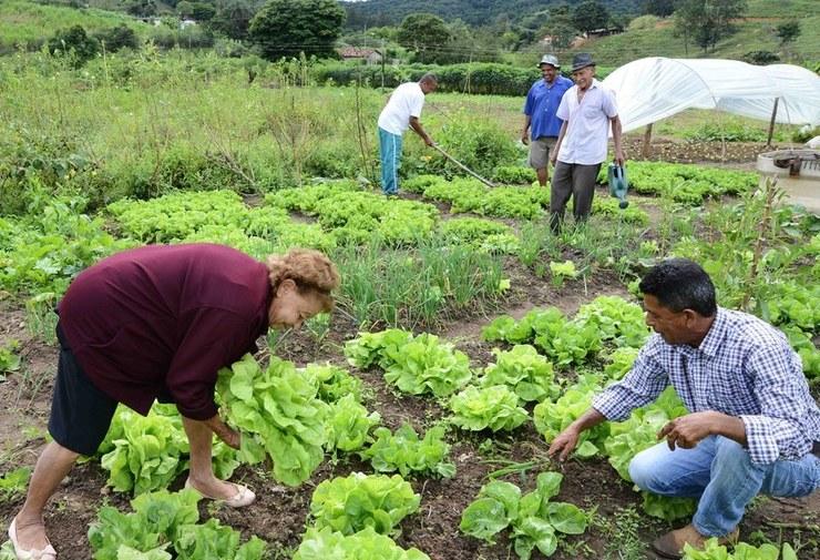 Trabalhador rural é, em sua maioria, homem e acima dos 45 anos de idade (Foto: Divulgação)